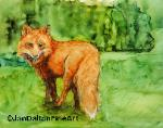 Ink Painting on Yupo Red Fox Jan Dalton Fine Art