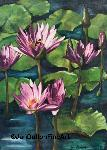 Waterlilies in pink bumble bee nectar